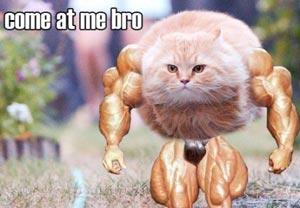 ネットミーム:「Come at me bro」
