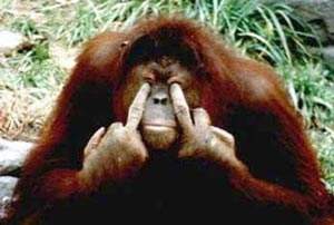 中指を立てる動物たち