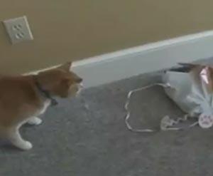 動物ハプニングコンピレーション動画