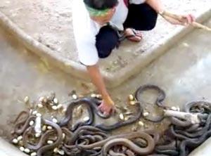 威嚇するコブラを物ともせず淡々と掃除をするおじさん