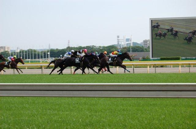 【悲報】競馬界に物凄いアホ騎手が現れてしまう ・・・