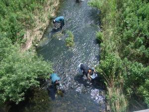 水質調査2014 (4)