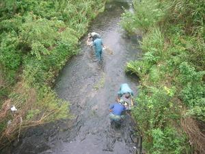 水生生物調査H27 (2)