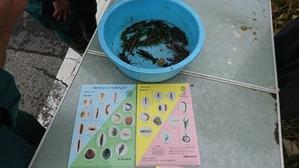 H29水生生物調査 (4)