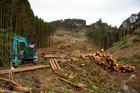 森林収穫7