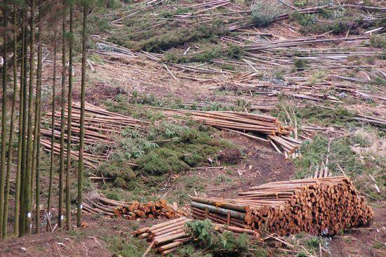 森林収穫6