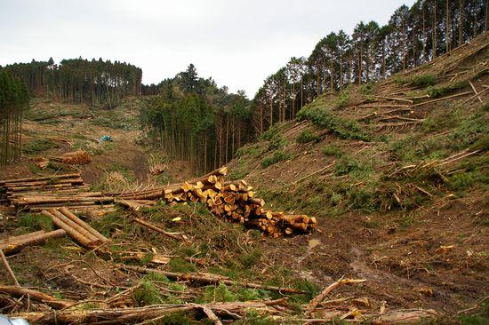 森林収穫4