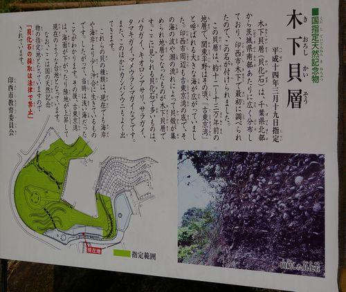 木下貝層2