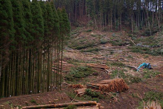 森林収穫5