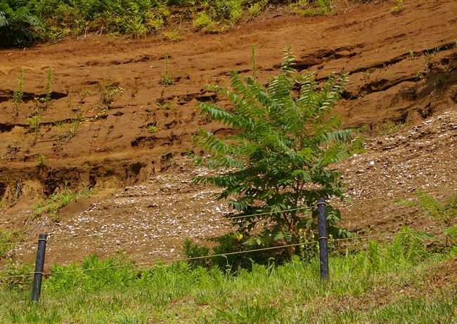 木下貝層4