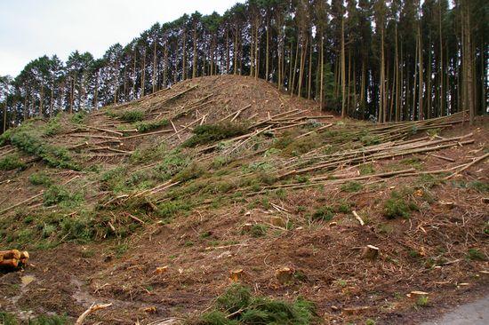 森林収穫3