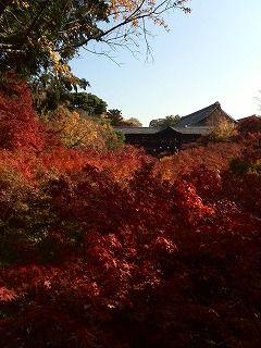 s-紅葉の東福寺KIMG0815