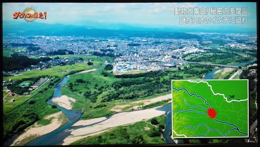 トライアングル どこ 多摩川