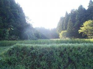 2012-08-19 早朝ライド 寒風山田中