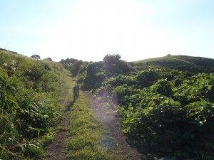 2012-09-01 早朝ライド 寒風山をガレやら、ヤブやら…