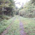 2012-09-21 早朝ライド 山道、畦道、凸凹道