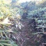 2012-10-09 早朝ライド 寒風山の竹やぶの中
