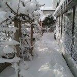 屋根から落ちてきた雪