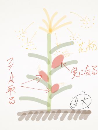 toumorokosi_kafun