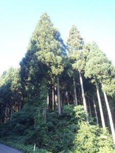 2012-08-22 早朝ライド 寒風山脇本