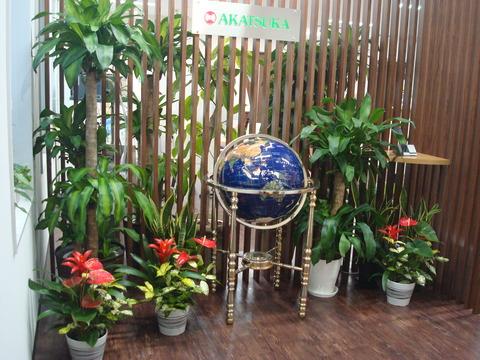 DSC05861_支店植物