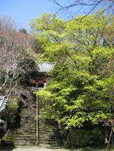 金蔵寺階段