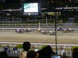東京シティ競馬 レース中