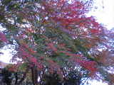 箱根_景色�