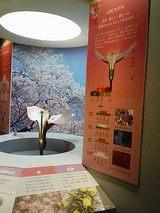 FLOWER_桜の展示