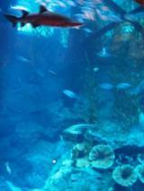 ドバイ・モール 水族館