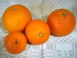 柑橘4種類