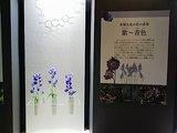 FLOWER_花色の展示