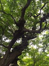 根津美術館 木々