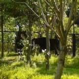 横浜の動物園 ズーラシア オカピ