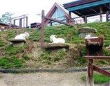 北海道 旭山動物園 ヤギ