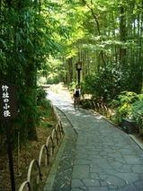 伊豆 修善寺温泉 竹林の小径