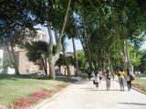 トプカプ宮殿庭園1