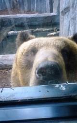 北海道 旭山動物園 熊