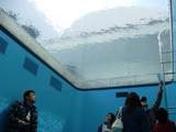 金沢21世紀美術館 レアンドロのプール2