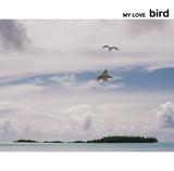 bird ���㥱