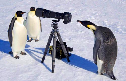064-ペンギン