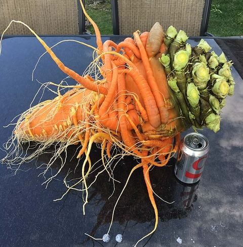 Heaviest-carrot-next-to-a-can_tcm25-497104