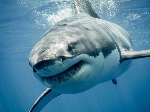 サメ-寿命