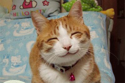 ニコニコ笑う猫