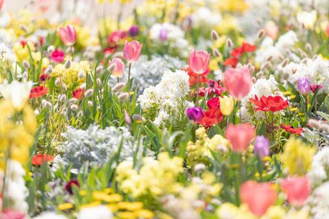spring201943FTHG7171_TP_V