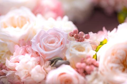flower420152_TP_V
