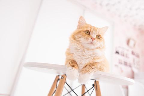 cat458A8566_TP_V