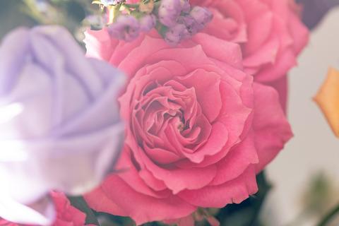 flowerFTHG1966_TP_V