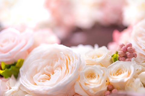 flower420149_TP_V