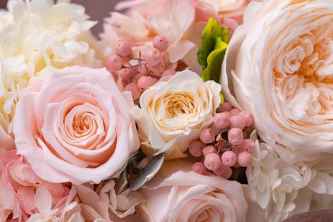 flower420157_TP_V